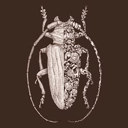 Sternotomis sci-fly