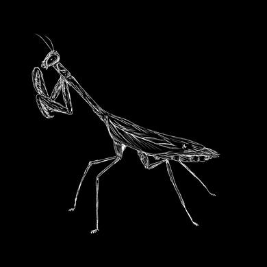 White Mantis