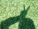 super_suz