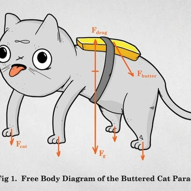 Buttered Cat Theory