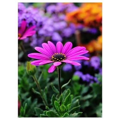 Many pink flower
