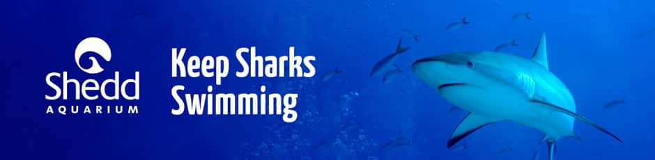 Shedd Aquarium: Shark Week