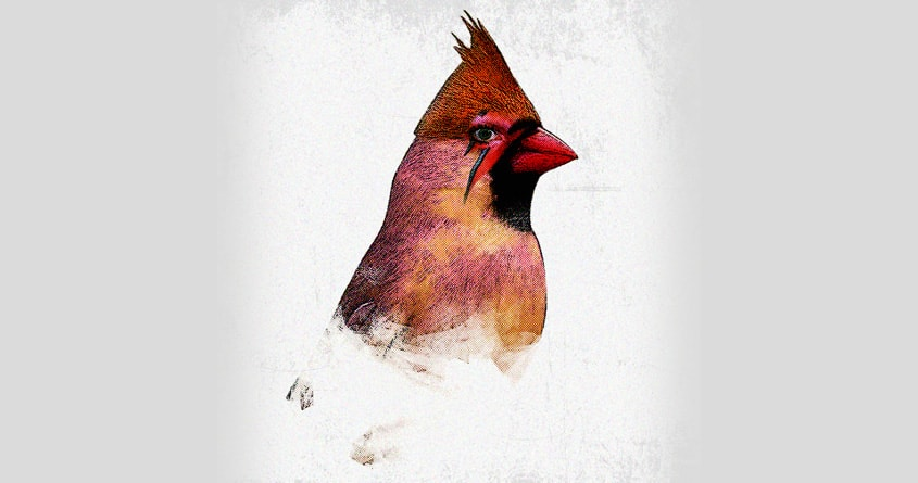 This Bird is Pop ! by kreadid on Threadless