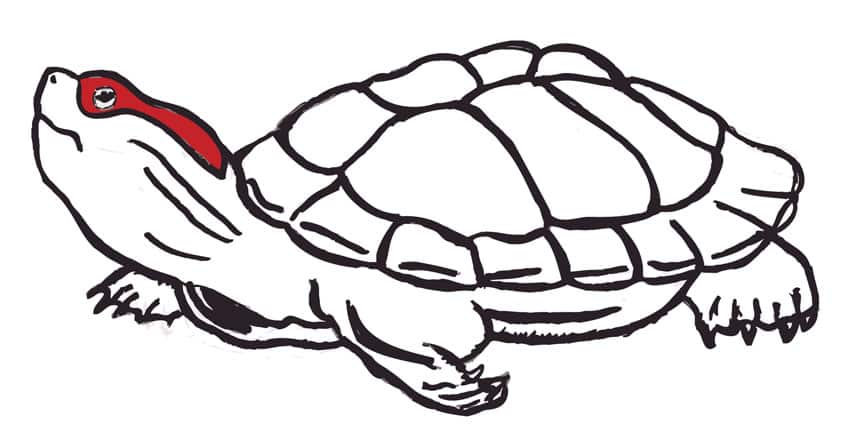 Missing Turtle! by Underdawg on Threadless
